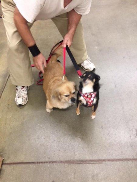Mini meets Sammy at pet smart