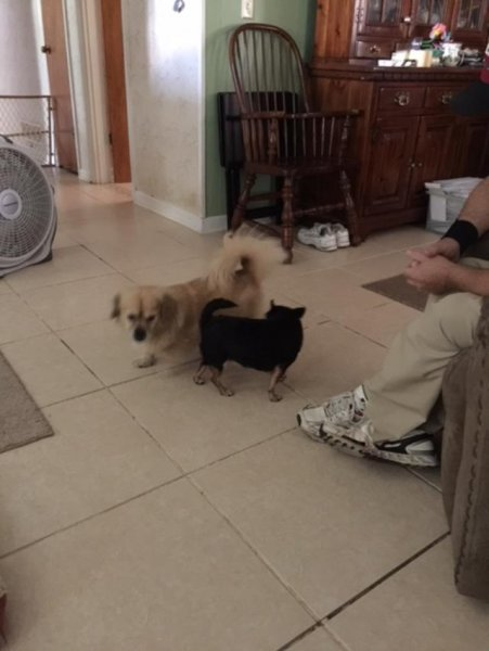 Sammy and Mini still trying to know each other