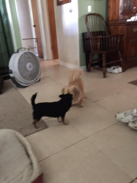 Sammy and Mini getting to know each other